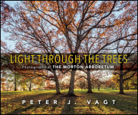 Light Through the Trees cover