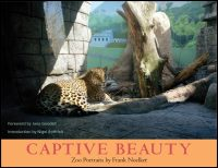 Cover for NOELKER: Captive Beauty. Click for larger image