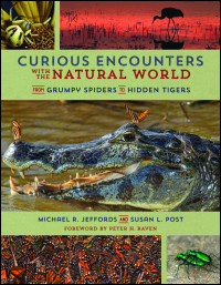 Cover for Jeffords: Curious Encounters with the Natural World: From Grumpy Spiders to Hidden Tigers. Click for larger image