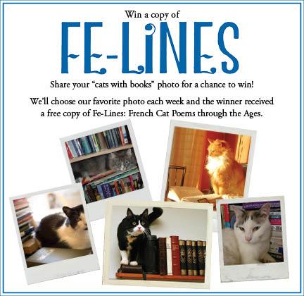 Felines Photo Contest