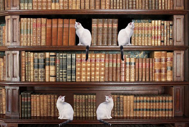 shelfcats